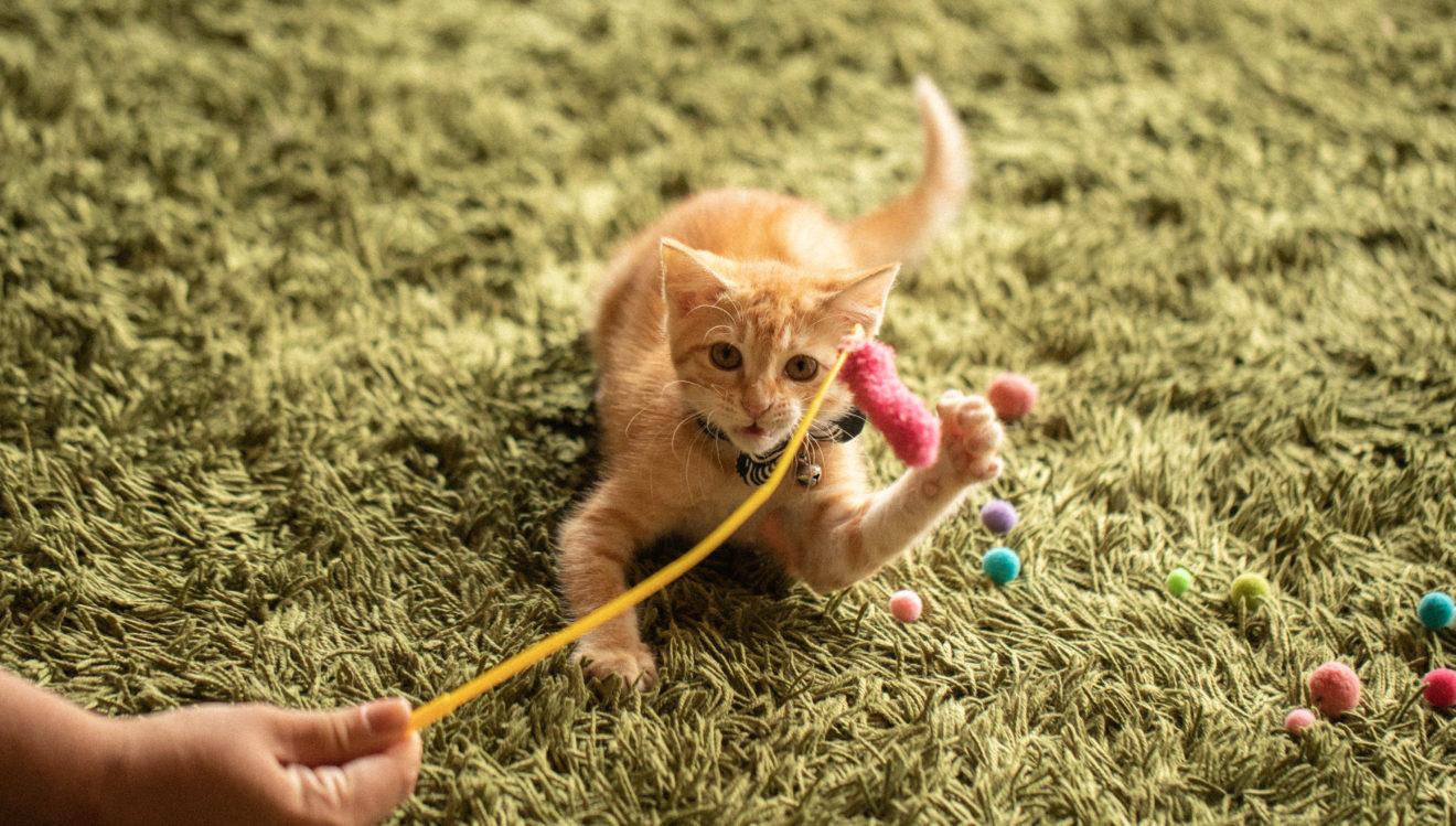 #うちの子記念日,猫