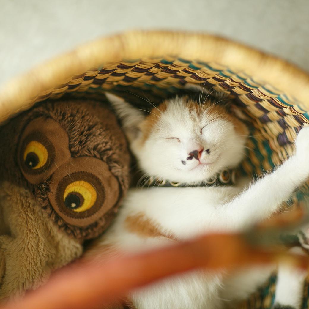 うちの子記念日,猫,ネコ