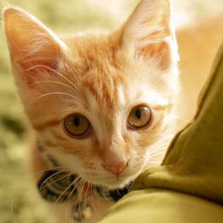 うちの子記念日,ネコ,猫