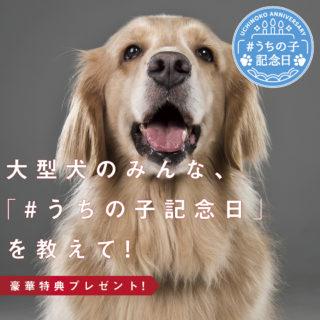 うちの子記念日,大型犬