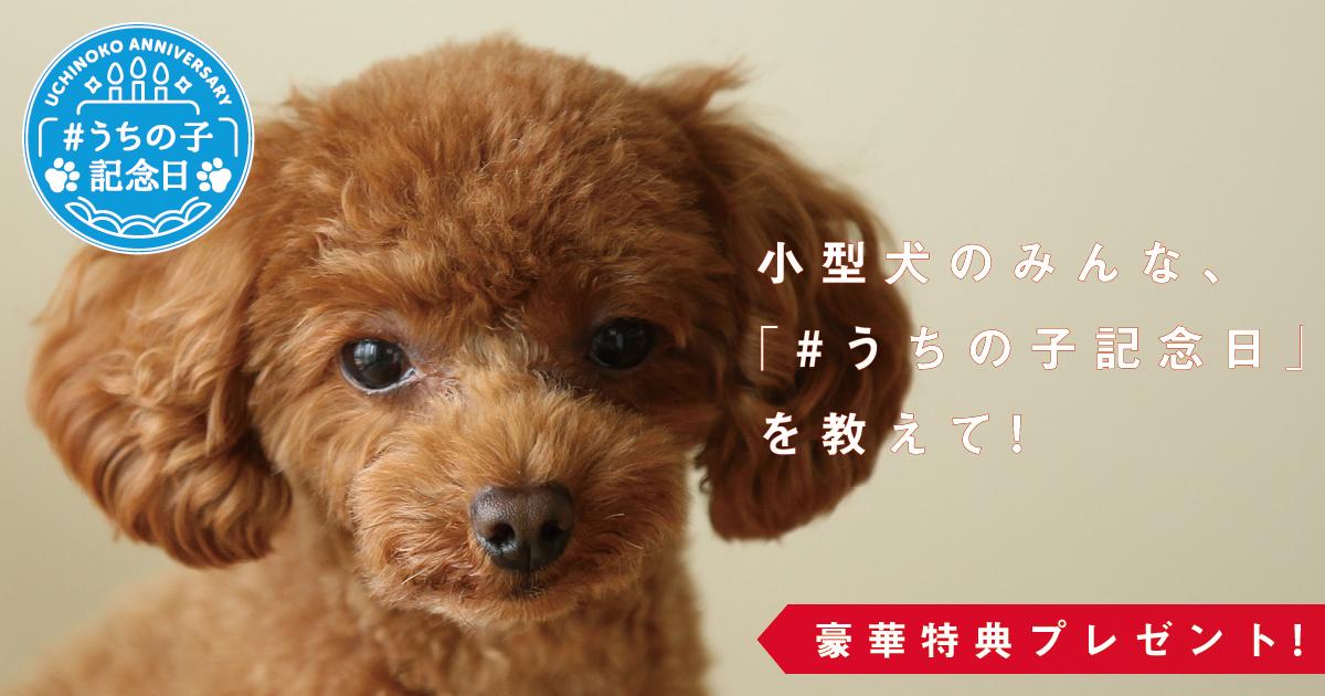 小型犬,うちの子記念日